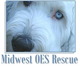 Midwest Old English Sheepdog Rescue- Minnesota & Indiana